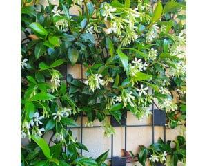 Zenturo végétalisable pour plantes grimpantes