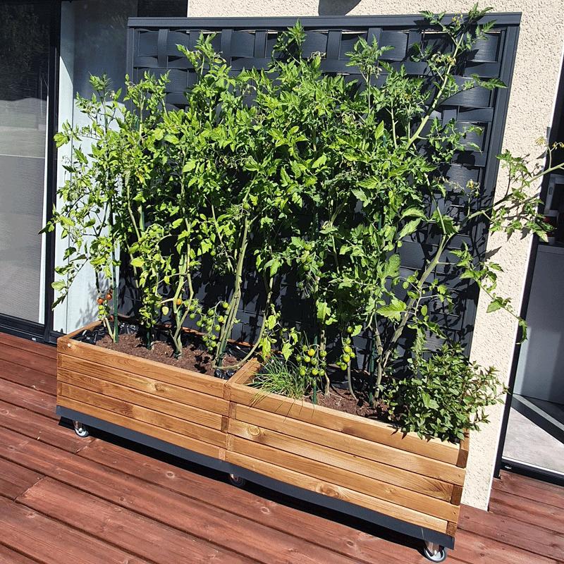 Jardinière plante après